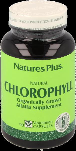 Chlorophyll 600 mg